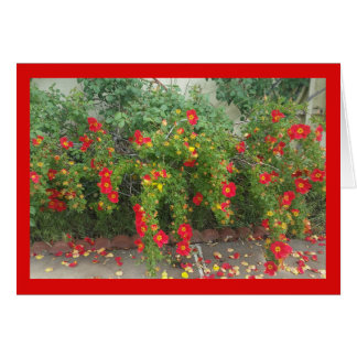 Popping Red Blooms- Song of Sol. 8:7 Greeting Card