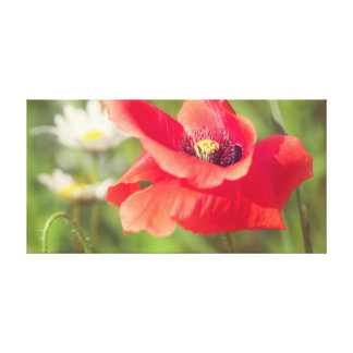 Poppy and daises canvas print