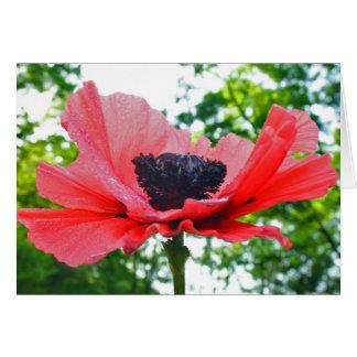 Poppy Blank Notecard