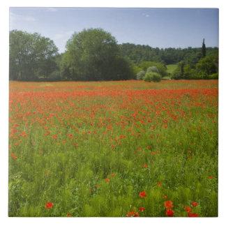 Poppy field, Chiusi, Italy Tile
