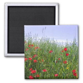 Poppy Field Magnet