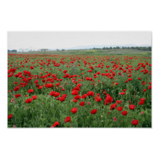 Poppy field nature landscape red flowers poster