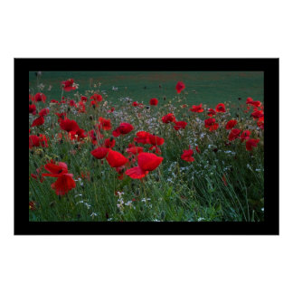 Poppy Field. Poster by cARTerART