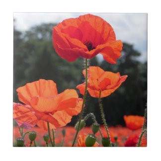 Poppy Field, Rosy Tangerine Flowers Tile