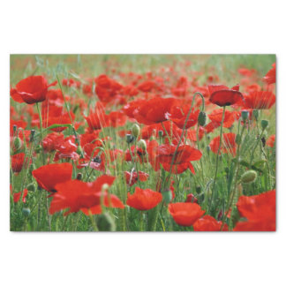 Poppy Field Tissue Paper
