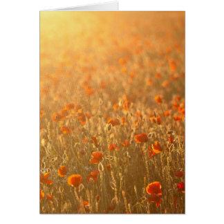 Poppy fields in the sunshine card