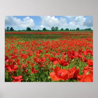 Poppy Fields Poster