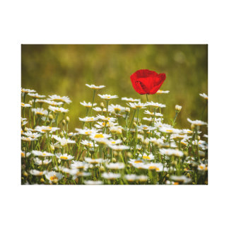 Poppy flower and Gänseblümchen Canvas Print