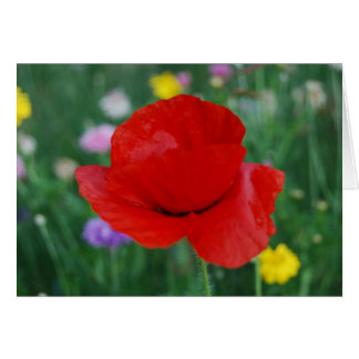 Poppy flower and meaning card