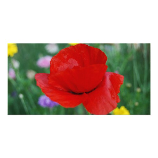 Poppy flower and meaning custom photo card