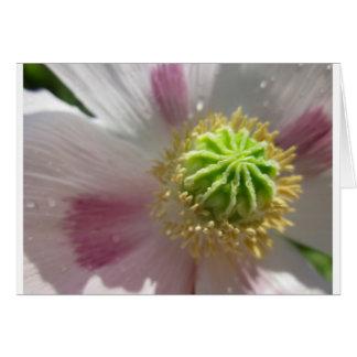 Poppy Flower Blank Inside Macro Greeting Card