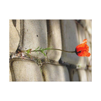 Poppy in the middle of paving stones canvas print
