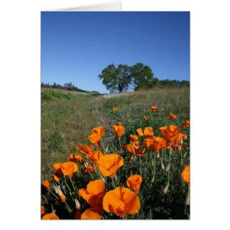 Poppy Landscape, Blank Note Card