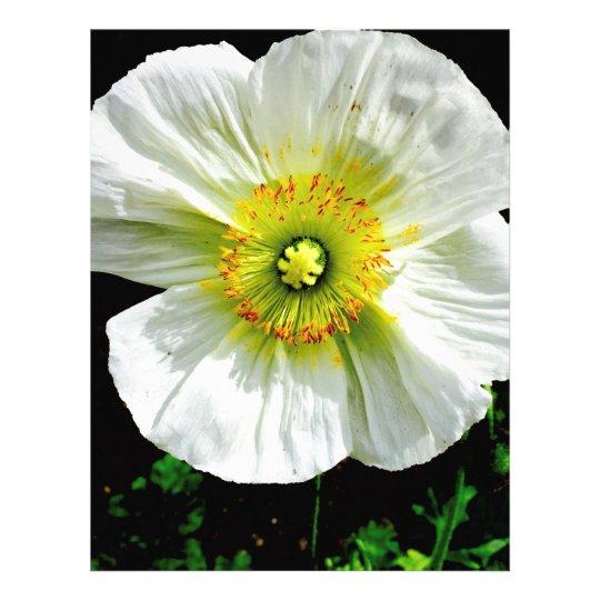 Poppy Letterhead
