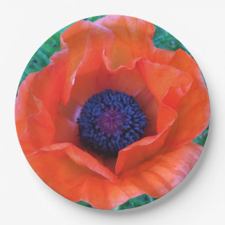 POPPY Oriental Red Orange --- Paper Plate