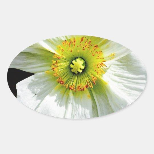 Poppy Oval Sticker