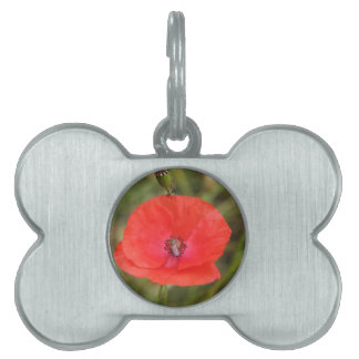 poppy pet ID tags