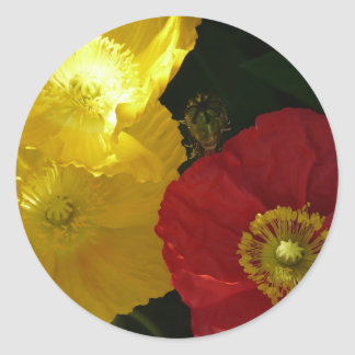 poppy,pink and yellow close up classic round sticker