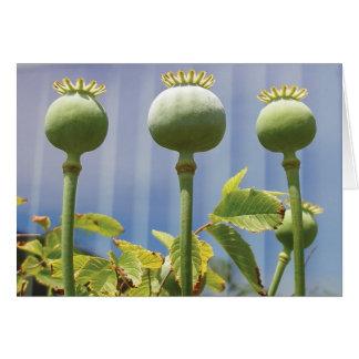 Poppy Pod Card