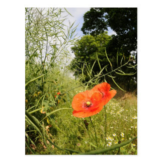 'Poppy' Postcard