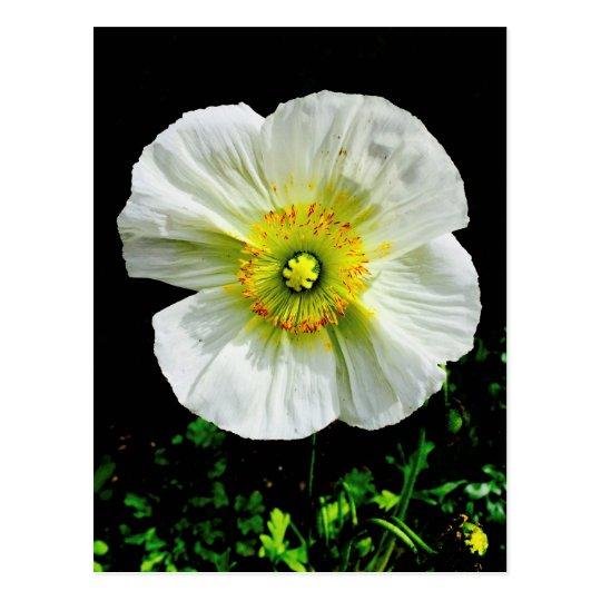 Poppy Postcard