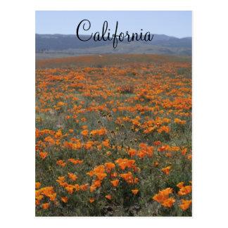 Poppy Reserve Postcard