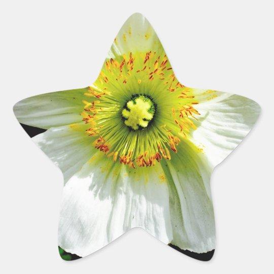 Poppy Star Sticker