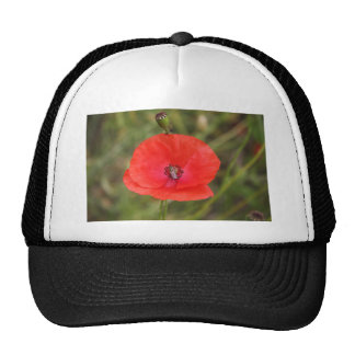 poppy trucker hat