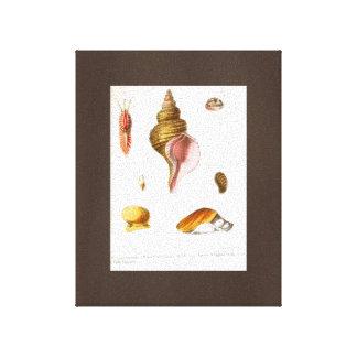 Popular Seashells Drawing Vintage Art Canvas Brown Canvas Prints