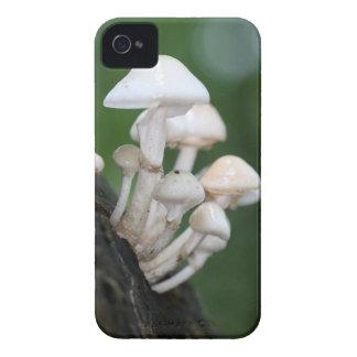 Porcelain fungus, Oudemansiella mucida Case-Mate iPhone 4 Cases