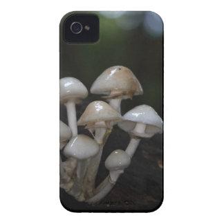 Porcelain fungus, Oudemansiella mucida iPhone 4 Case-Mate Cases