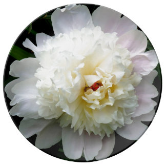 Porcelain Plate Large, Double White Peony