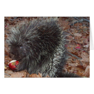 Porcupine and Apple Card