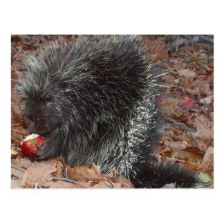 Porcupine and Apple Postcard