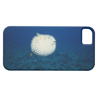 Porcupine Fish iPhone 5 Cases