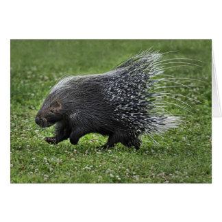 Porcupine Gallop Card