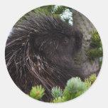 porcupine round sticker