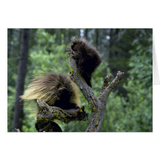 Porcupines-summer-mom with youngsters card