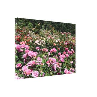 Portland Rose Garden Canvas Print