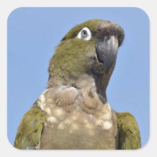 Portrait Burrowing Parrot Square Sticker