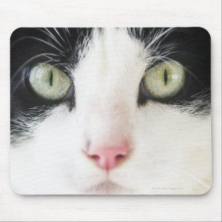 Portrait de chat domestique tapis de souris