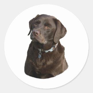 Portrait de photo de chien de Labrador de chocolat Sticker Rond