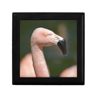 Portrait flamingo gift box