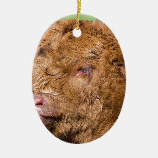 Portrait head newborn scottish highlander calf ceramic ornament