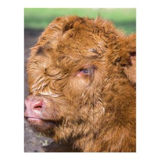 Portrait head newborn scottish highlander calf customized letterhead