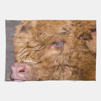 Portrait head newborn scottish highlander calf kitchen towel