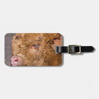 Portrait head newborn scottish highlander calf luggage tag