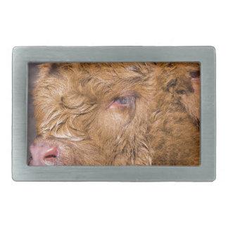 Portrait head newborn scottish highlander calf rectangular belt buckle