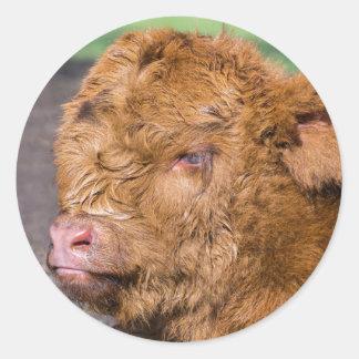 Portrait head newborn scottish highlander calf round sticker