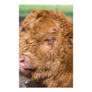 Portrait head newborn scottish highlander calf stationery